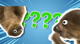 Sloth quiz