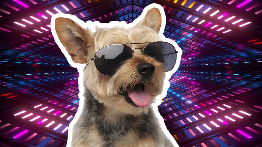 A dog at a disco