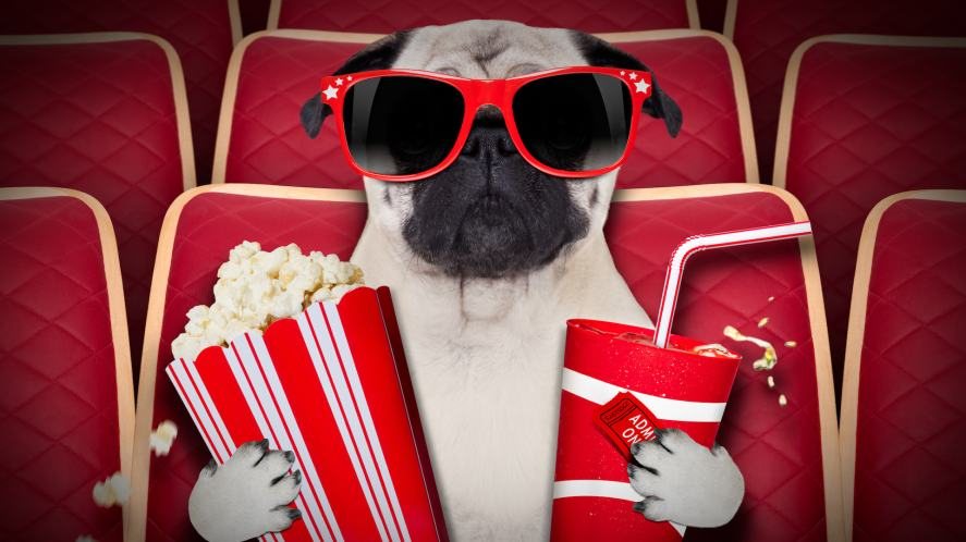 A dog holding popcorn and a drink at the cinema