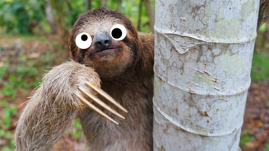 A sloth climbing down a tree trunk