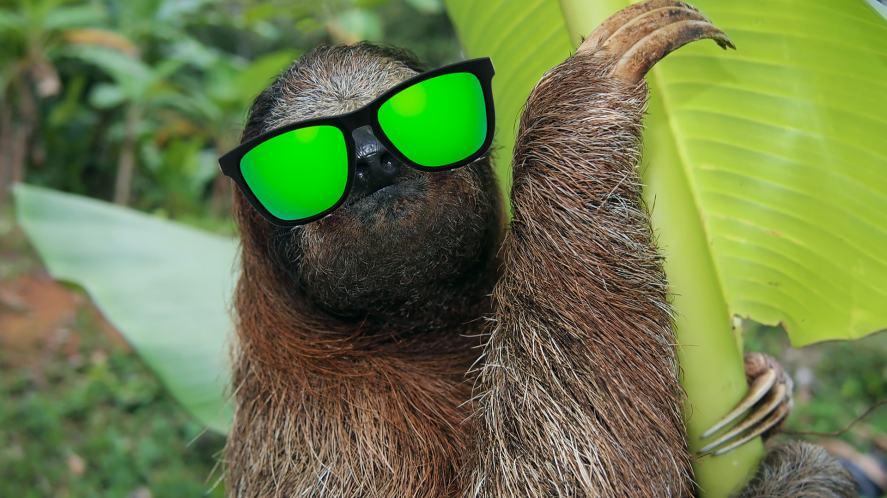A sloth wearing sunglasses