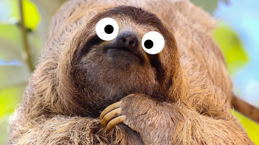 A sloth relaxing