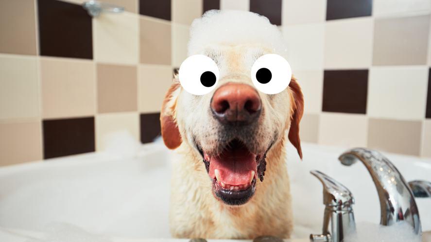 A labrador in a bubble bath
