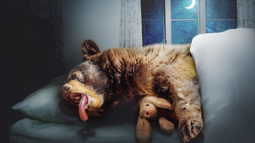 A bear sleeping and drooling in a big bed