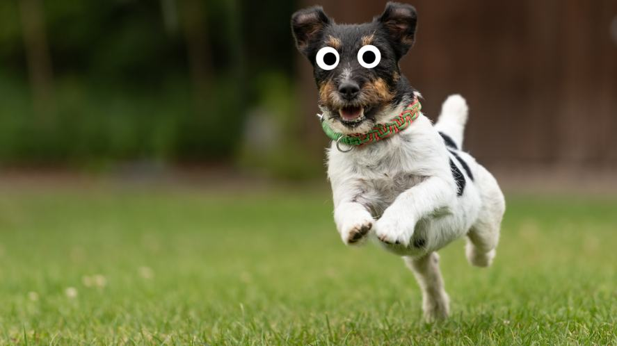 A small dog running in the park