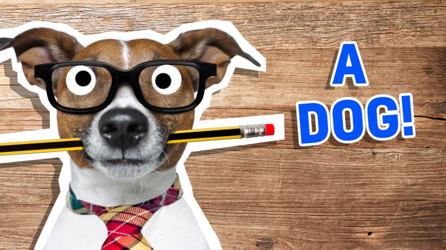 A dog with a pencil in its mouth