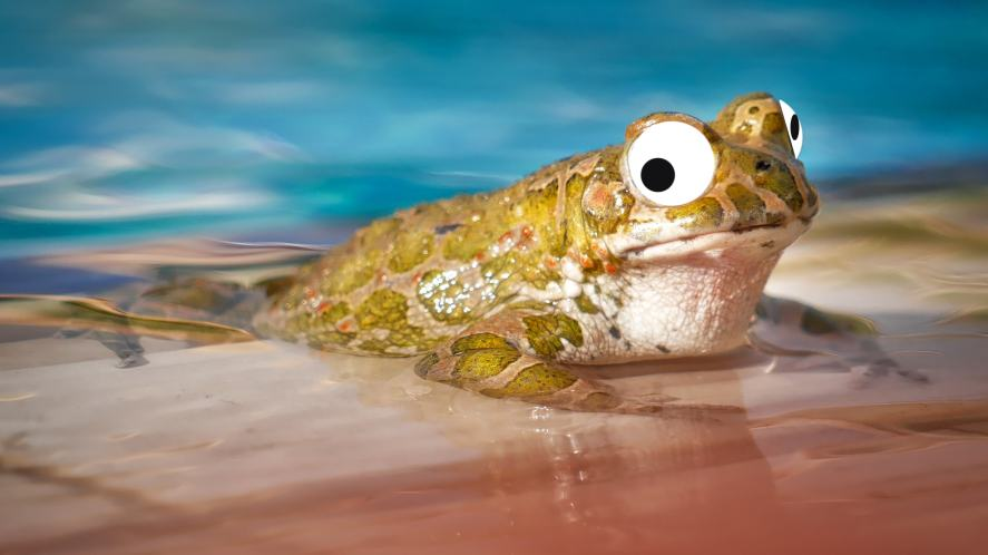 A frog in a pool
