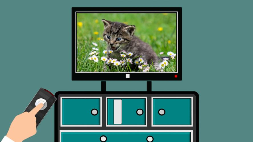 A cat on TV