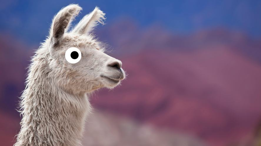 A llama staring into the distance