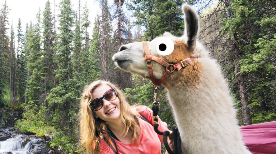 A tall llama and a friend