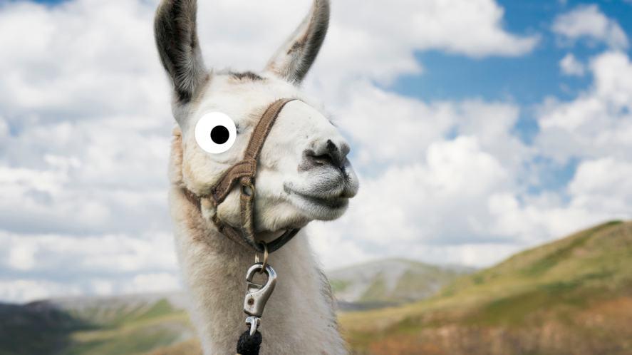 A llama in the wild