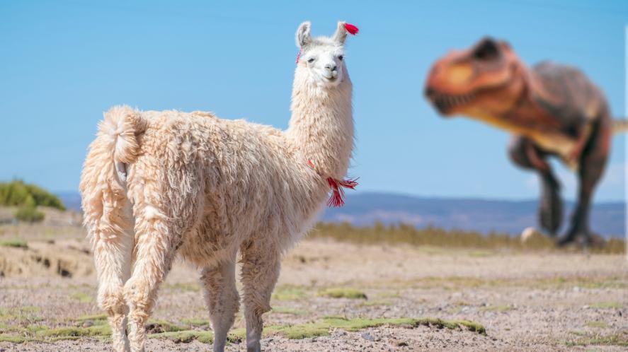 A llama and a dinosaur