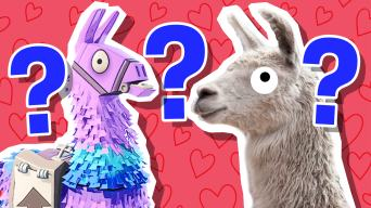 A Fortnite llama and a regular llama