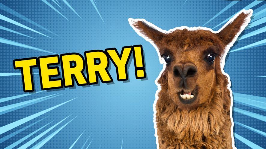 Terry the llama