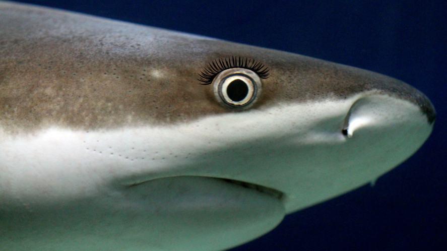 A close-up of shark's eye