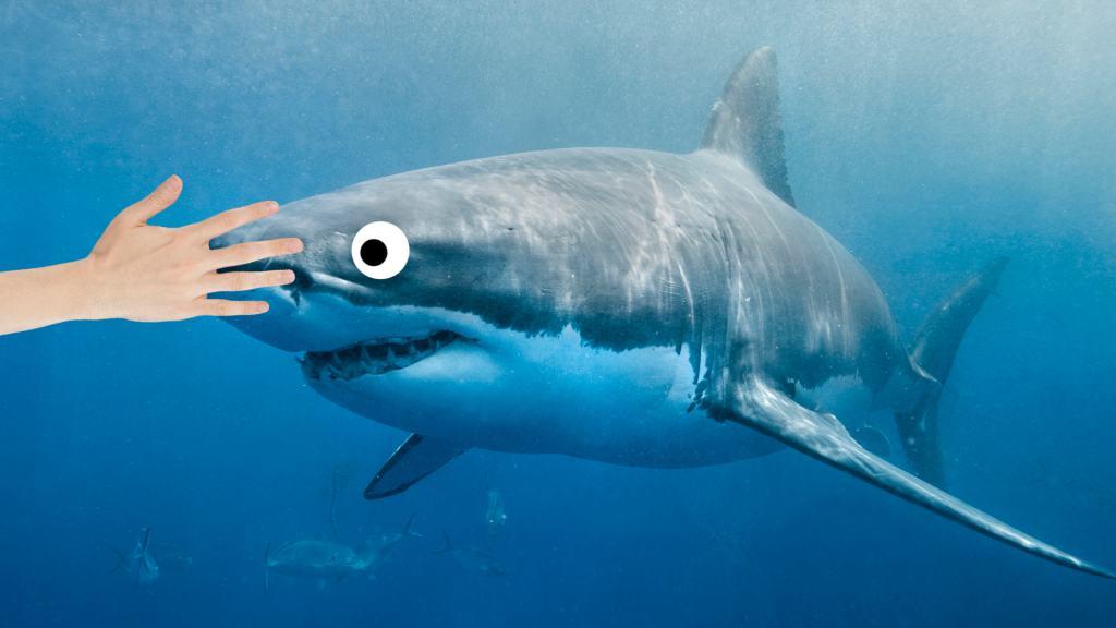 A human hand touching the head of a shark