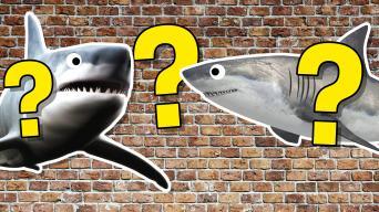 Shark quiz