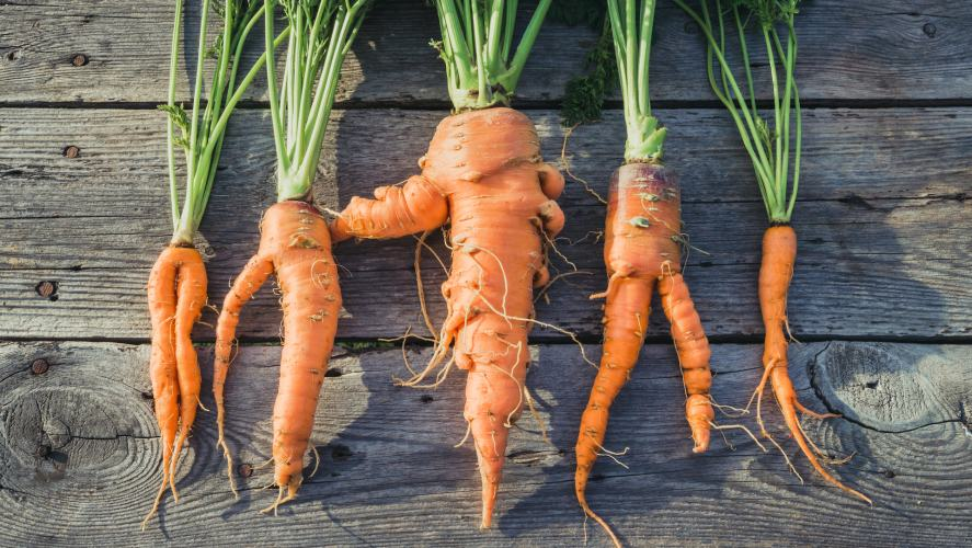 Some weird looking carrots