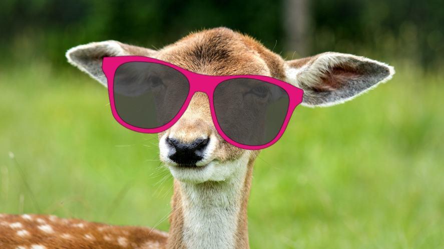 A deer with big ears wearing glasses