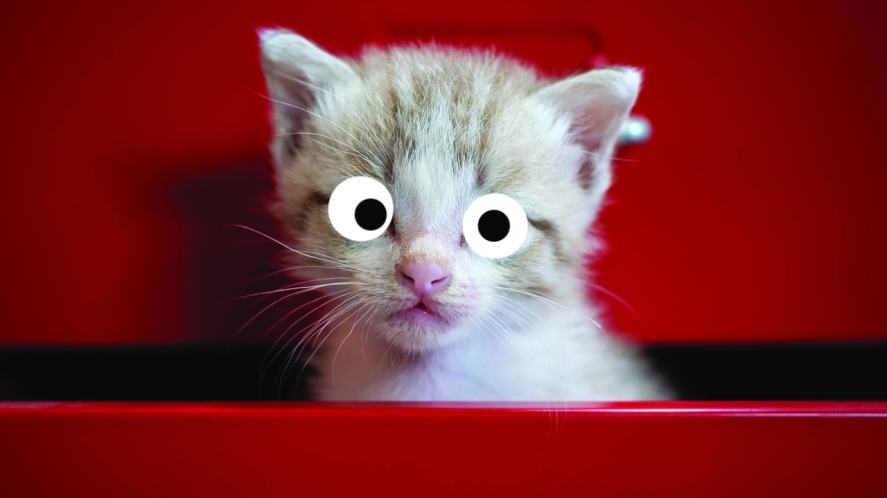 A sad kitten peering from a drawer