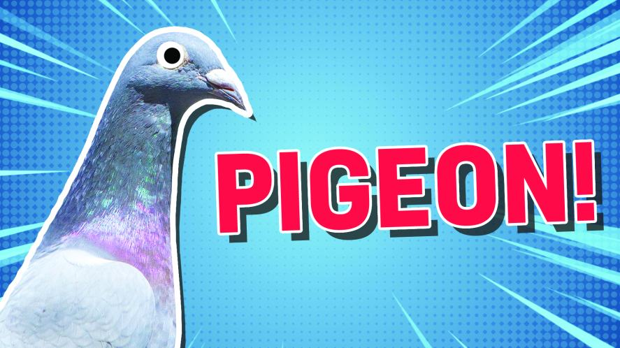 A beady-eyed pigeon