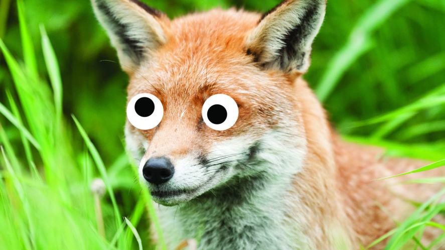 A cunning fox hiding in the grass