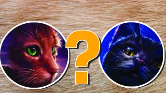 Warrior Cat quiz