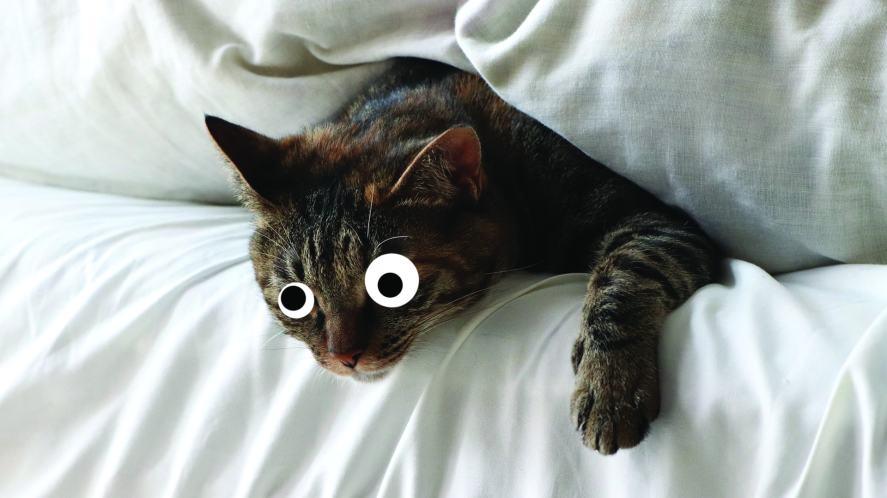 A cat snuggled into a duvet