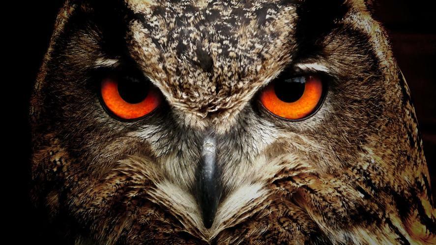 An owl with deep orange eyes