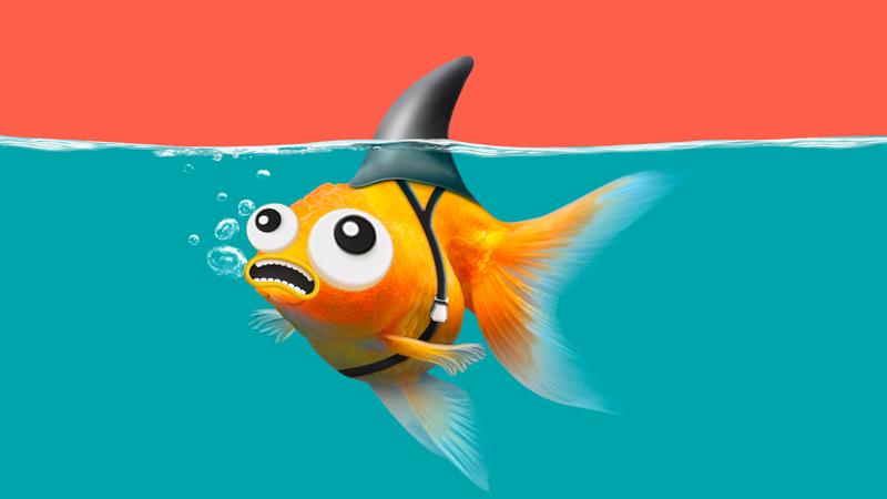 A goldfish in water wearing a black shark fin