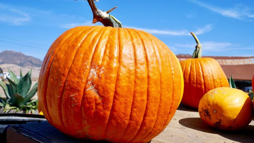 A huge pumpkin