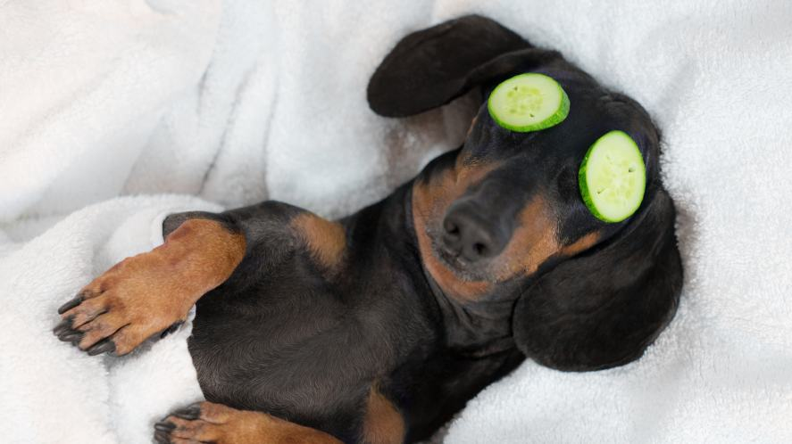 A dog relaxing with slices of cucumbers on its eyes
