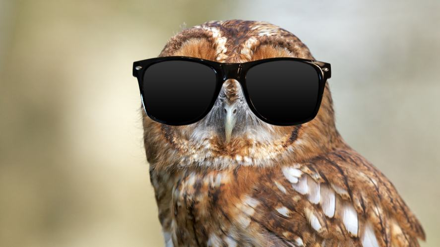 An owl wearing sunglasses