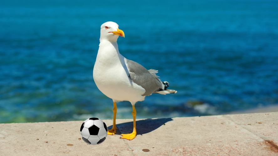 A seagull poses with a football