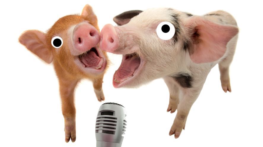 Pigs singing into a microphone