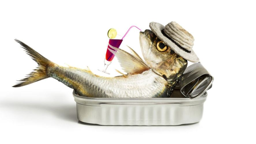 Sardine relaxing in a tin.