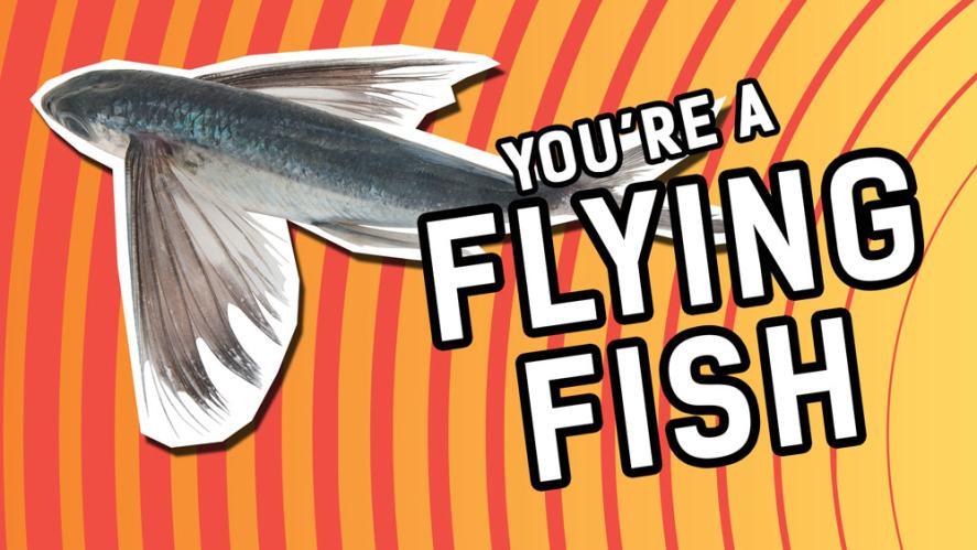 Aiming high like a flying fish