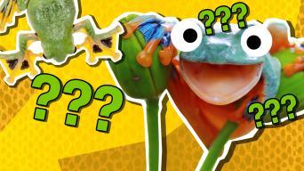 Flying frog quiz