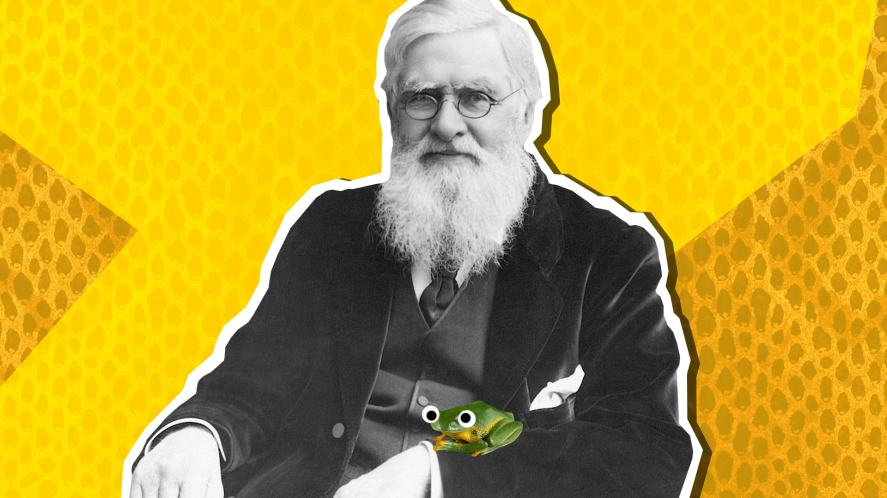 The famous biologist Wallace