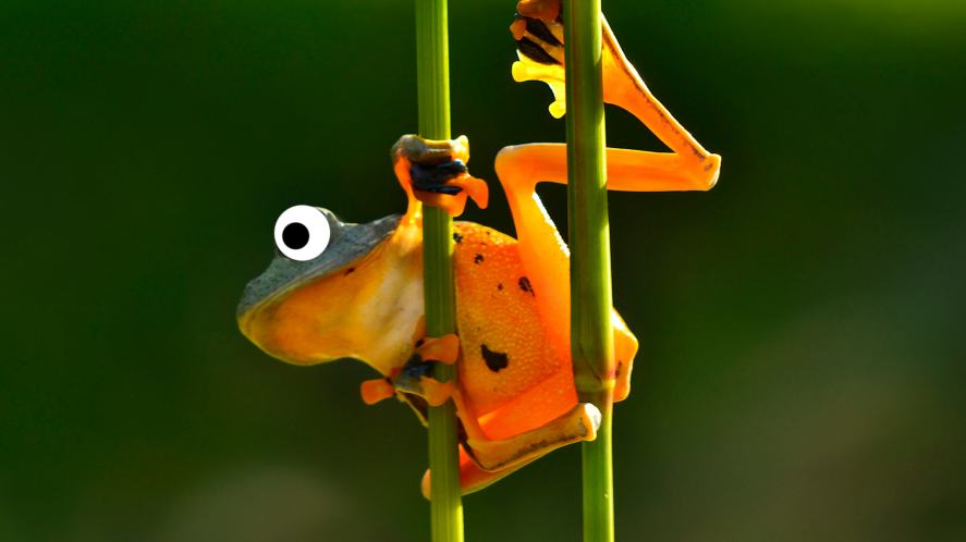 A flying frog prepares to leap from a branch