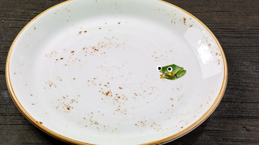 A frog on an empty plate