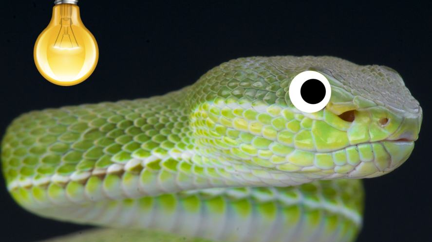 A pit viper in the dark, illuminated by a lightbulb