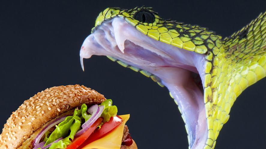 A snake biting into a hamburger