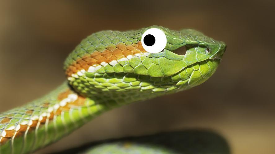 A Siamese viper