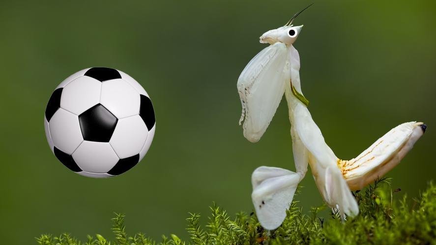 An Orchid Praying Mantis playing football