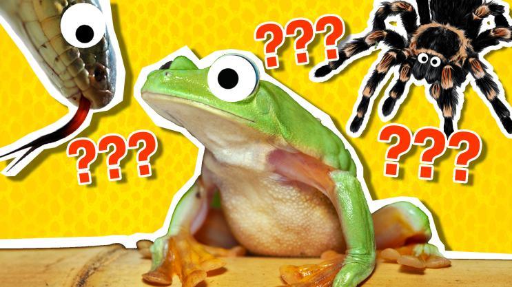 Animal Week personality quiz