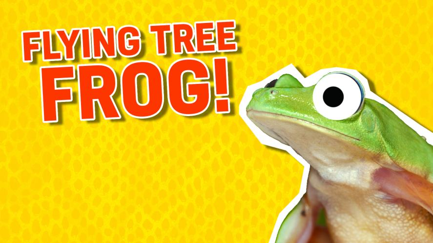 A flying tree frog