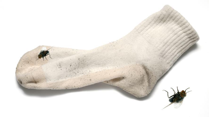 A stinky sock