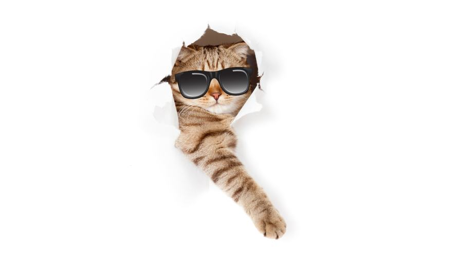 A cat wearing sunglasses tearing through a sheet of paper