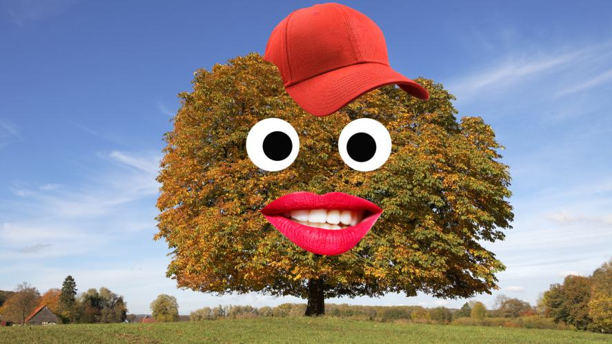 A chestnut tree wearing a cap